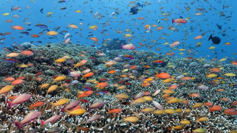 Wissenschaftler: Bedeutender Teil von Australiens Great Barrier Reef durch Hitzewelle vernichtet