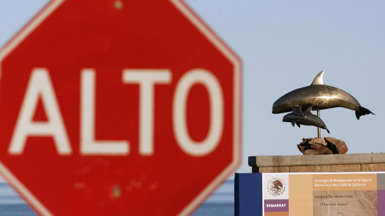Mexiko weitet Schutzzone für bedrohte Schweinswale aus