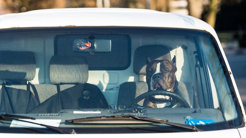 Hund am Steuer: Lkw crasht in Laden, weil Herrchen den Motor laufen ließ