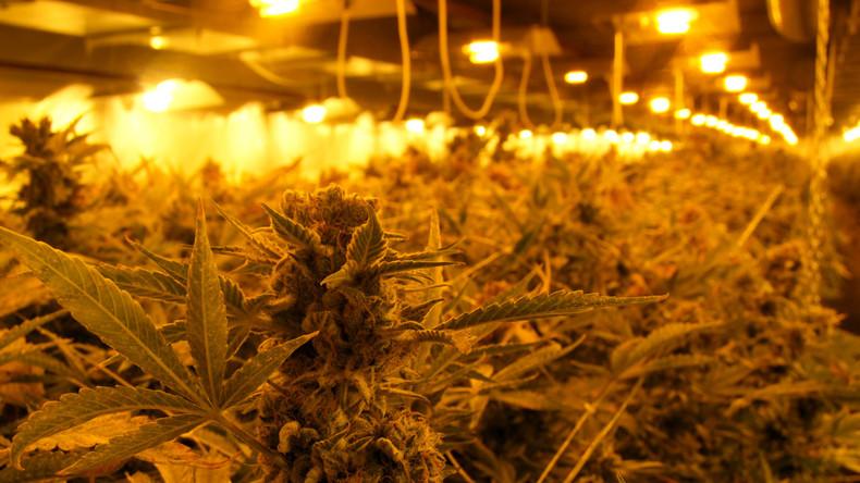 Beihilfe zum Drogenhandel: Vermieter muss Strom für Cannabisplantage zahlen