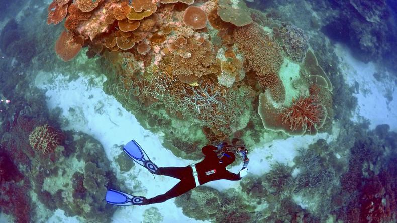 Australien bietet Millionen für Rettung des Great Barrier Reef auf