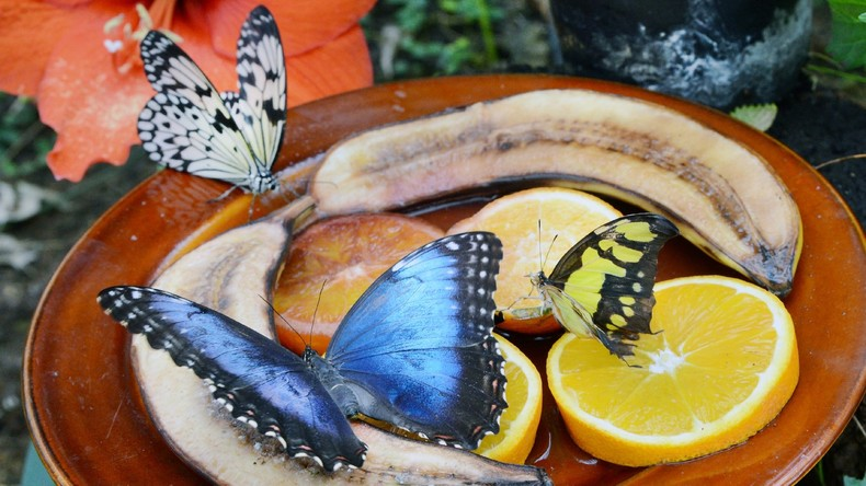 Frau lässt Schmetterling aus Wintergarten mitgehen und kommt in Haft