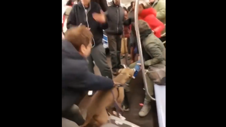 Nach Streit um Dogspreading in New York: Pitbull greift Mädchen in U-Bahn an