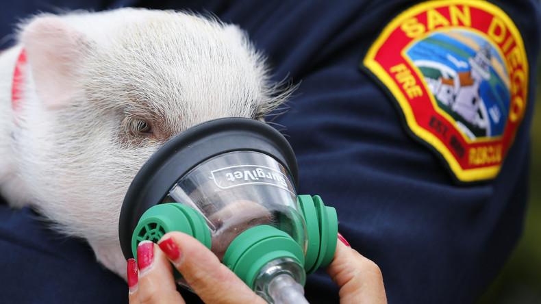 Erste Feuerwehren werden mit Beatmungsmasken für Haustiere ausgerüstet