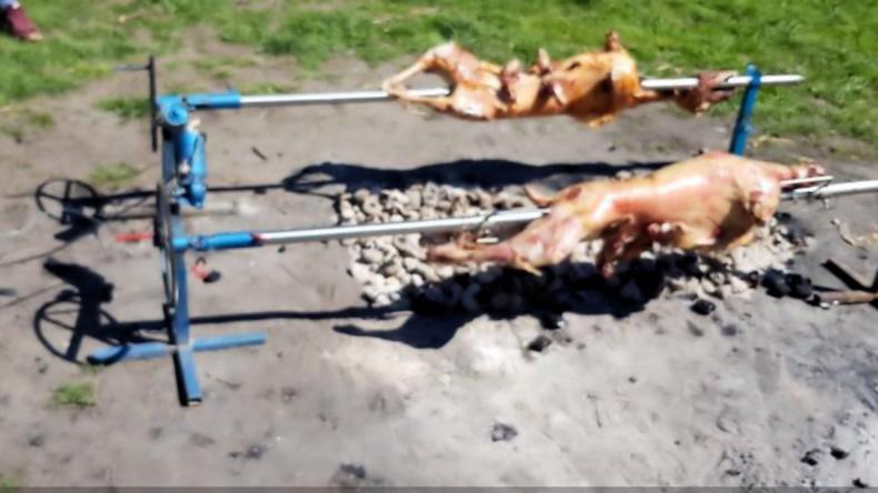 Mega-Grillparty im Park: Zwölf Schafe am Spieß rufen Polizei auf den Plan