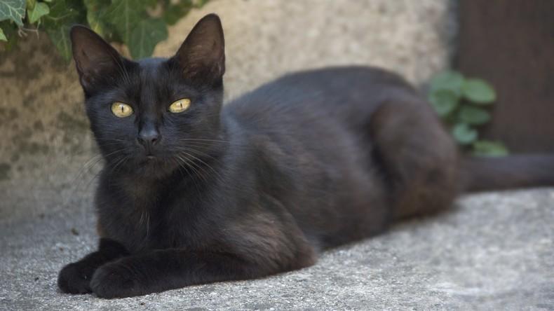 Überraschendes Wiedersehen: Katze kehrt nach 14 Wanderjahren nach Sydney heim