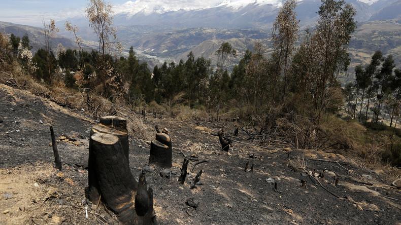 Lateinamerika: Der peruanische Amazonas verliert fast zwei Million Hektar an Wald