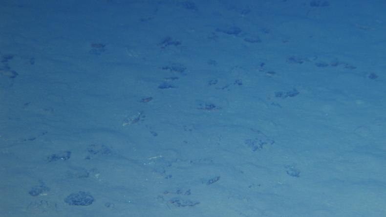 Plastikmüll an den tiefsten Stellen des Ozeans: Neue Studie zu 30 Jahren Meeresverschmutzung