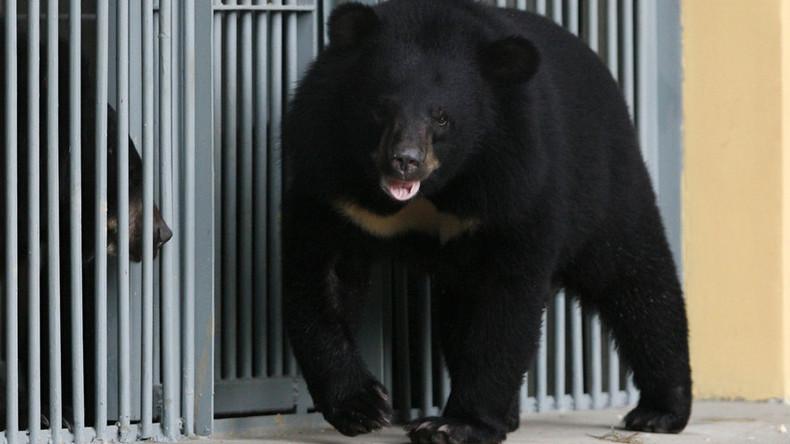 """""""Er isst zwei Eimer Nudeln pro Tag"""": Chinesin kaufte einen Hund, der zu einem großen Bären wuchs"""