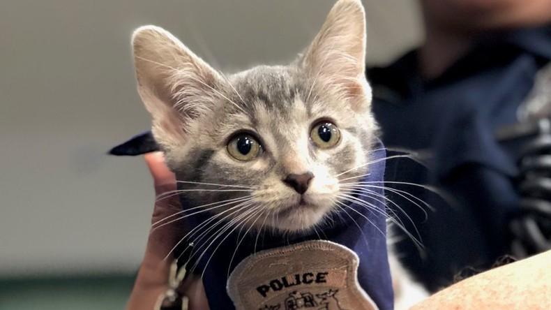 Schnurrkommando im Einsatz: US-Polizei bekommt Polizeikatze zur Verstärkung