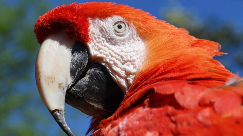 Mann streitet mit Papagei – Nachbarn alarmieren Polizei