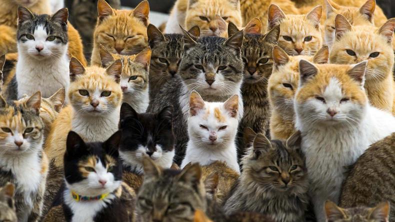 Australien schafft katzenfreie Zone: 44-Kilometer-Zaun schützt endemische Fauna vor Samtpfötchen