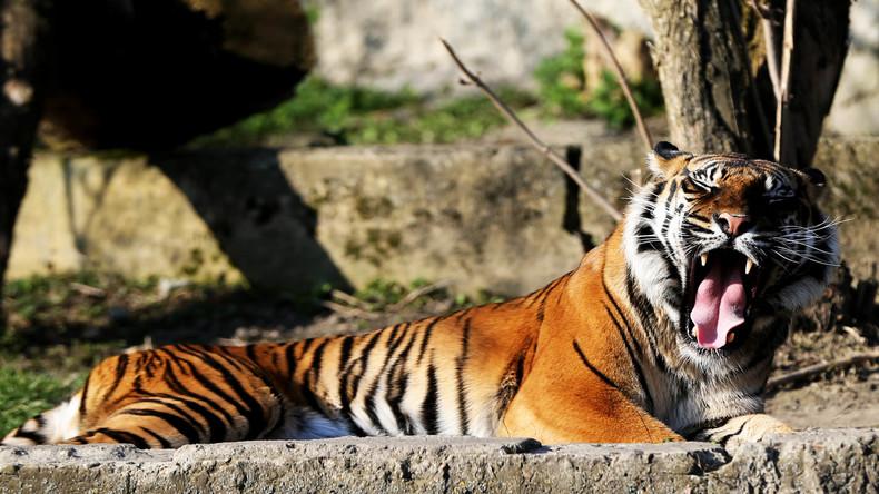 Raubtiere nach Hochwasser aus Zoo in Rheinland-Pfalz ausgebrochen: Löwen, Tiger und Jaguar gesucht