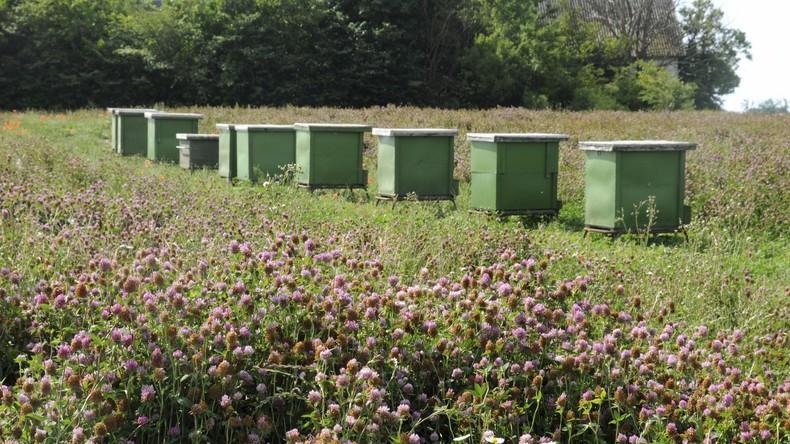 Diebe stehlen in Schweden gut zwei Millionen Bienen samt 1.000 Litern Honig