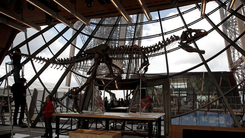 Paris: Über 150 Millionen Jahre altes Dino-Skelett für zwei Millionen Euro versteigert