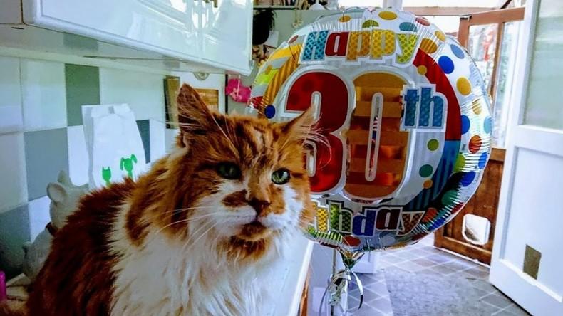Ältester Kater der Welt feiert 30. Geburtstag – Frauchen hält Tier dem Rampenlicht fern