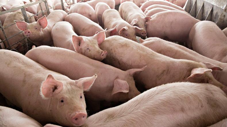 Reaktion auf Trumps Industriezölle: Mexiko belastet künftig Importe auf US-Schweinefleisch