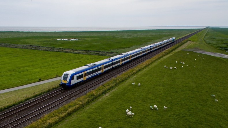 Regionalbahn rast in Schafherde in Baden-Württemberg - 45 Tiere tot