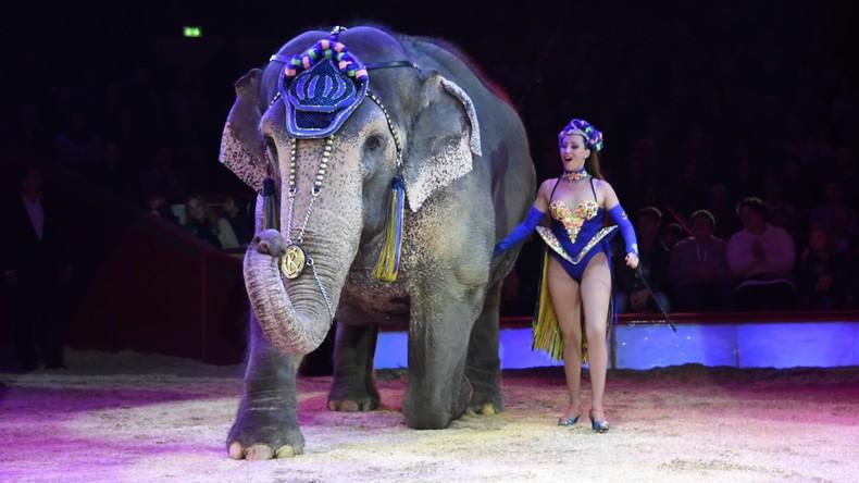 Ein Elefant geht seine eigenen Wege: Rüsseltier bricht aus Zirkus aus und spaziert durch die Stadt