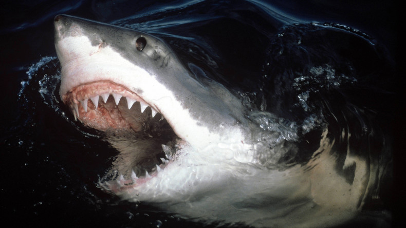 Scharfes Souvenir: Weißer Hai scheitert beim Angriff auf Surfer – hinterlässt dafür Zahn im Brett
