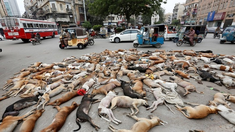 Fake News: Bild von getöteten Hunden in Russland stammt eigentlich aus Pakistan