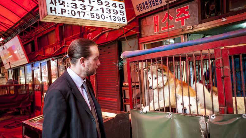 Runter vom Tisch: Schlachtung von Hunden in Südkorea in historischer Gerichtsentscheidung verboten