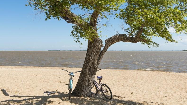 Verführung war zu groß: Dieb sägt Baum ab, um teures Fahrrad zu stehlen