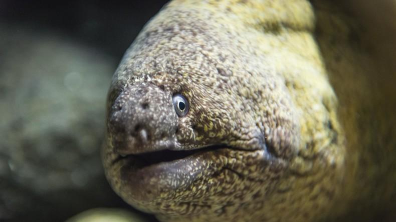 Studie: Kokain in britischen Flüssen beeinträchtigt Sex-Leben von Aalen
