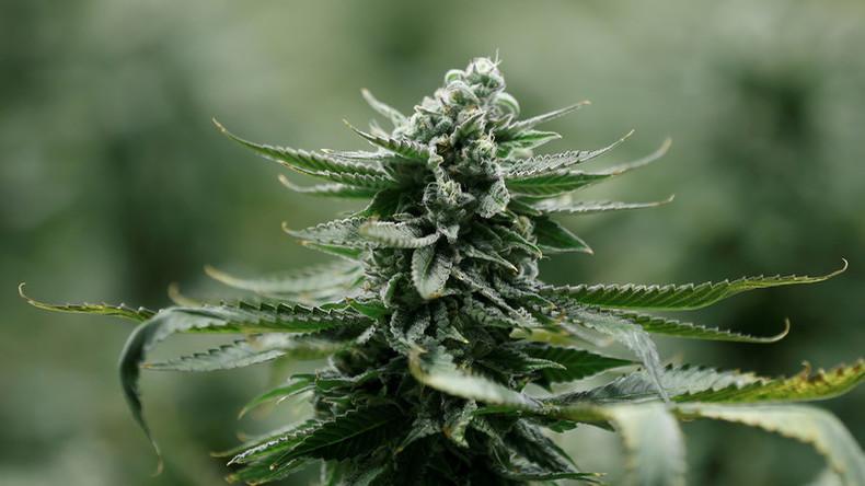 USA: Marihuana-basiertes Medikament erstmals landesweit für Markt zugelassen