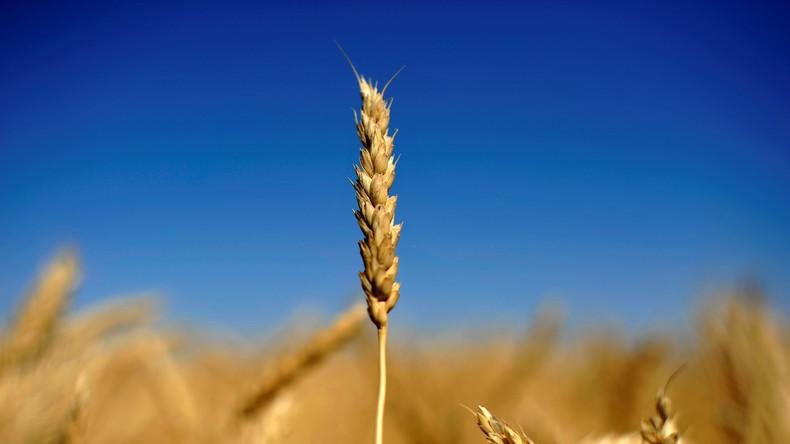 Existenz bedroht: Ernteausfälle machen deutschen Landwirten zu schaffen