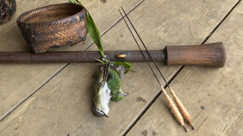 Niederlande: Tödliches Pfeilgift von Indianern aus Museum für Naturwissenschaften gestohlen