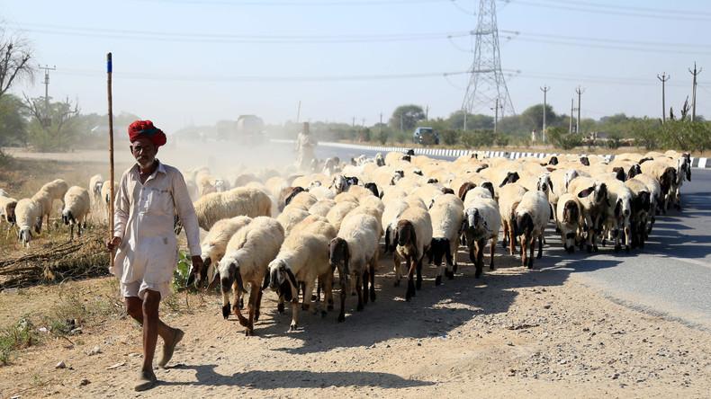 Gerichtsbeschluss: Tiere haben im indischen Bundesstaat Uttarakhand die gleichen Rechte wie Menschen