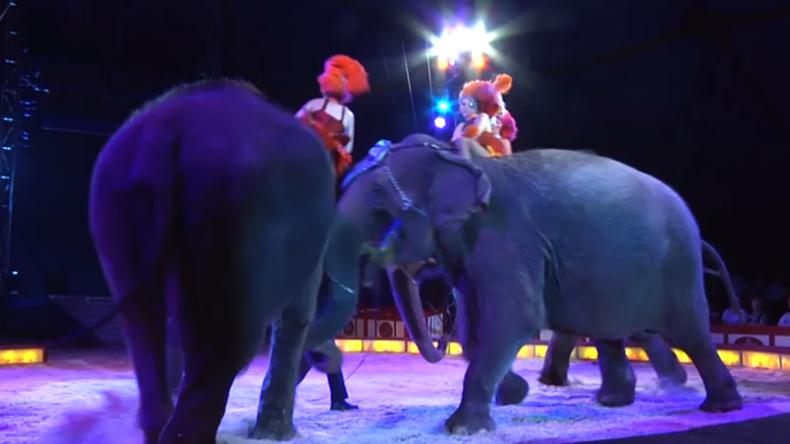 Osnabrück: Zirkus-Vorstellung geht schief – Elefant stürzt und fällt fast ins Publikum