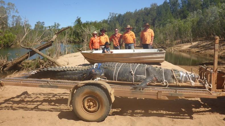 Nach acht Jahren Jagd unschädlich gemacht: Australische Förster fangen 600-Kilo-Krokodil
