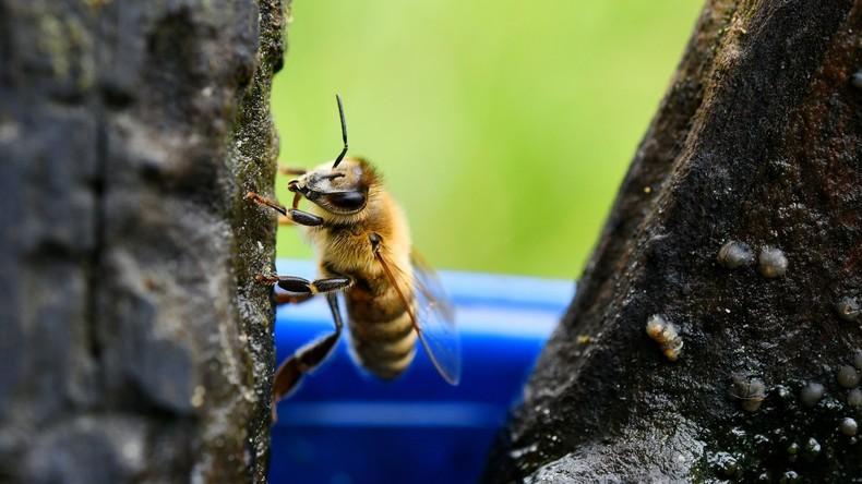 LKW voller Bienen von Auto gerammt – genervte Insekten machen den Unfallort zur Hölle