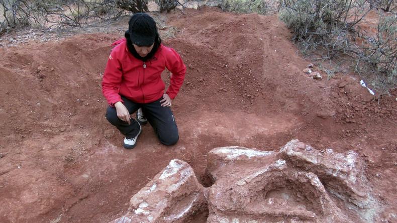 Mega-Dinosaurier in Argentinien entdeckt (Photos)