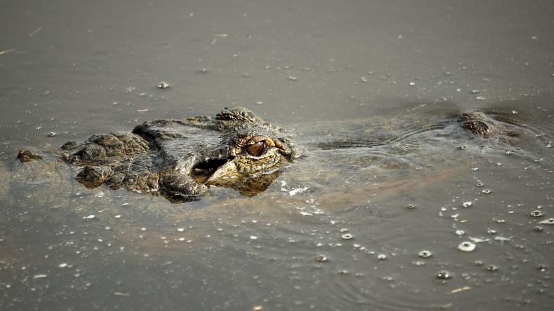 Mutterinstinkt: Frau vertreibt Krokodil und rettet ihren Sohn aus dessen Schnauze