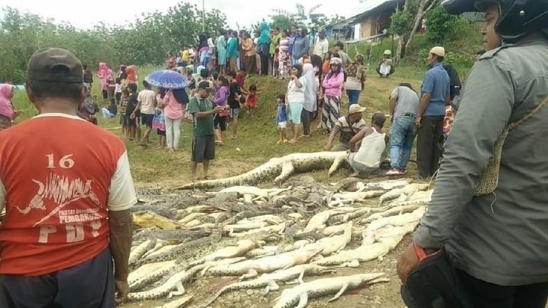 Blutige Rache an Krokodilen: Dorfbewohner schlachten 292 Tiere ab [FOTOS]