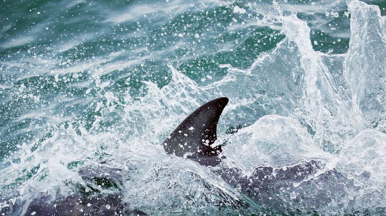 USA: Erste Hai-Attacken vor Long Island seit 70 Jahren – zwei Kinder gebissen