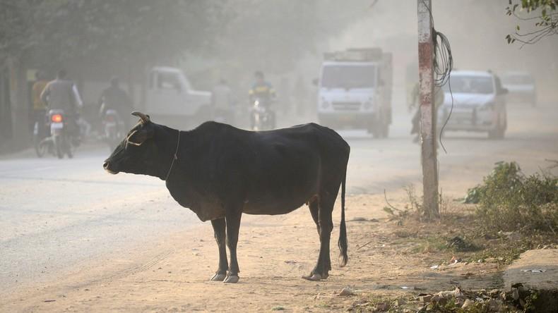 Indien: Mob tötet Muslim wegen angeblichen Schmuggels heiliger Kühe