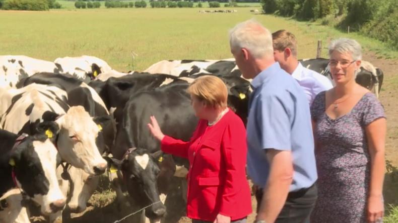 """Bundeskanzlerin besucht Milchbetrieb und wird Kuh-Mama: """"Futter ist interessanter als ich"""""""