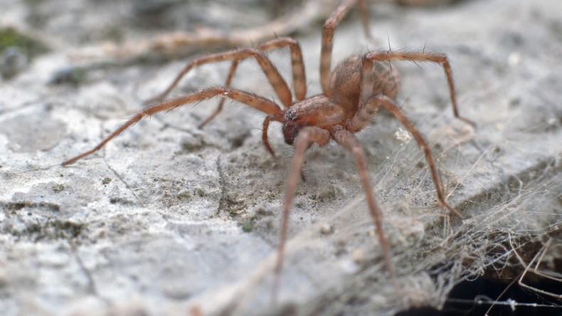 USA: Dreifache Mutter verliert Bein nach Spinnenbiss