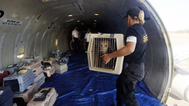 In 4.000 Metern Höhe: Hund öffnet Frachtluke von Passagierjet
