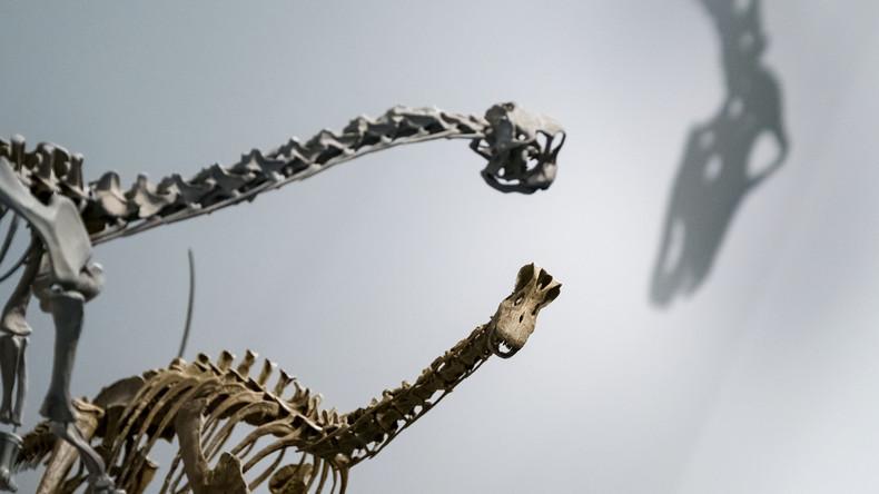 """""""Bigfoot"""": Forscher melden weltweit größten Saurierfuß"""