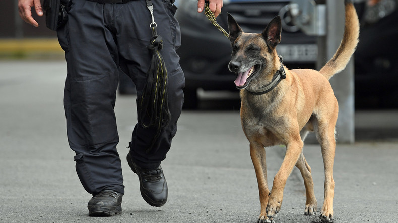 Kolumbien: Kopfgeld auf Schäferhund - Drogen-Clan will Sombra tot sehen