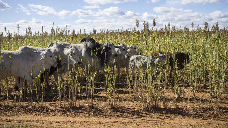 Wie die westliche Agrarpolitik in Afrika die Flüchtlingskrise verschärft