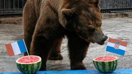 Wer wird der Gewinner des Weltcup-Finales in Moskau am Sonntag? Bujan, ein Bär aus dem Zoo in Krasnojarsk, versucht sich in der Prognose.