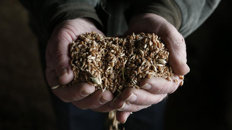 Boomende Landwirtschaft verändert Russlands von Energieexporten dominierte Wirtschaft