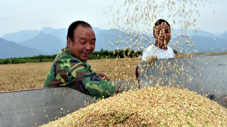 Medien: China steht vor Einbruch der Weizenlieferungen nach Zöllen auf US-Waren