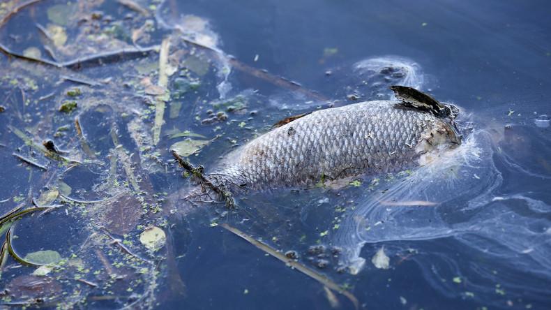 Sauerstoffmangel: 20 Tonnen verendete Fische aus Münsters Aasee entfernt